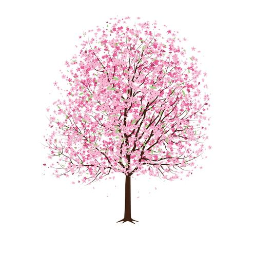 Pink Cherry Blossom Tree Vector.