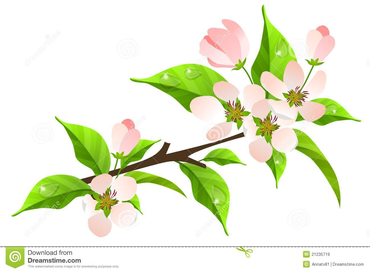 Apple Tree Branch In Bloom Royalty Free Stock Images.