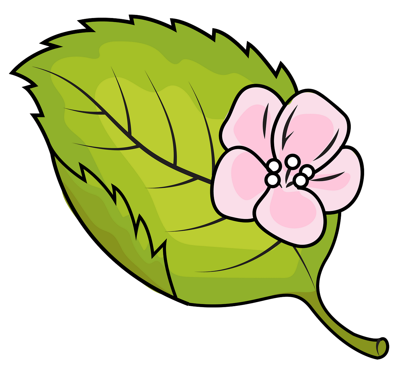 Apple tree leaf clipart. Free download..