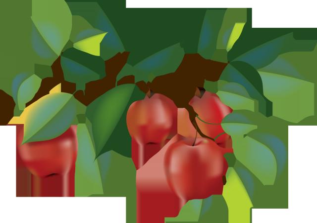 Apple Tree Branch Clipart.