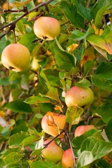 1000+ ideas about Apple Tree Nursery on Pinterest.