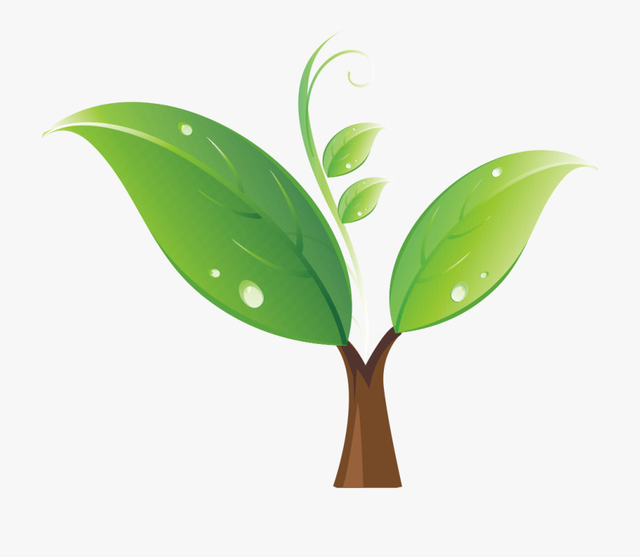 Seedling Tree Clip Art Green Sprout Transprent.