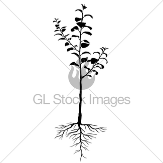 Annual Seedling Apple Trees With Roots · GL Stock Images.