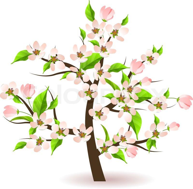 Spring Apple Tree Clipart.