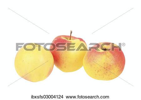 """Stock Photo of """"Apples, Ditzel?ÇÖs Rose Apple variety, traditional."""