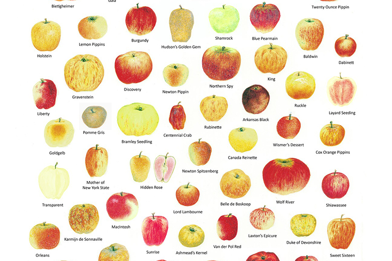 Chef's Talk: Favourite BC Apples.