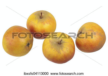 Stock Photography of Apple variety Holstein Cox ibxsfs04113000.