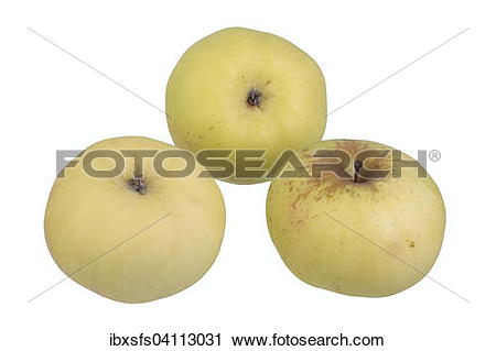 Stock Photography of Apple variety Champagne Reinette.