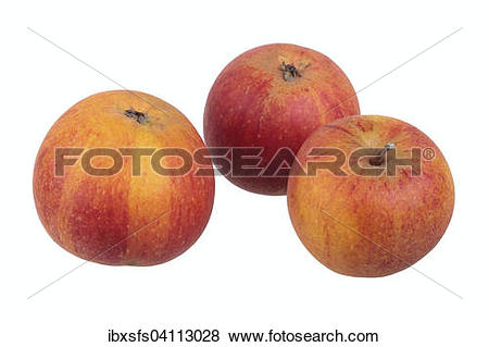 Pictures of Apple variety Cox Orange Reinette ibxsfs04113028.