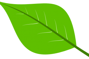 Apple leaf clipart » Clipart Station.