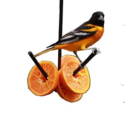 Amazon.com : Erva Wild Bird Hanging Fruit Feeder for.