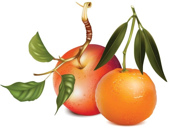Apples and oranges vector Free vector in Encapsulated.