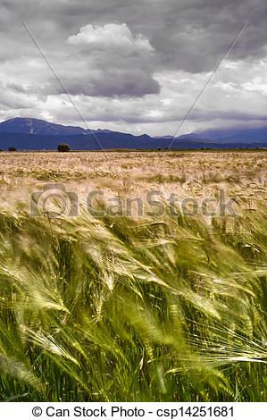 Pictures of storm approaching wheat field.