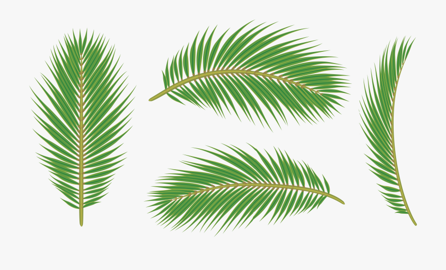 Palm Leaves Background Download Clipart With A.