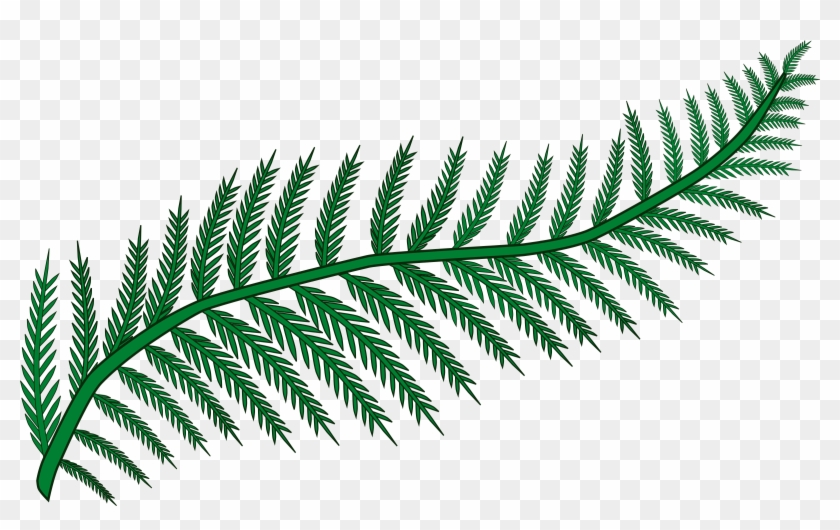 Branch Fern Forest Frond Plant Png Image.