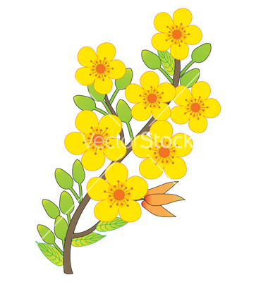 Apricot blossom vector by thanhtrong007.