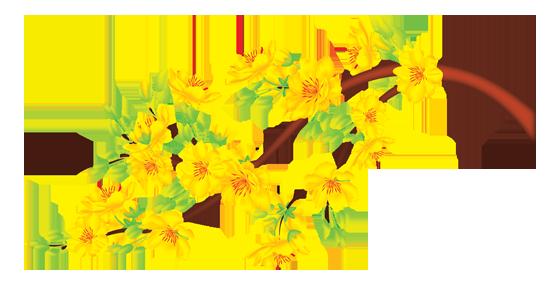 Hoa mai.