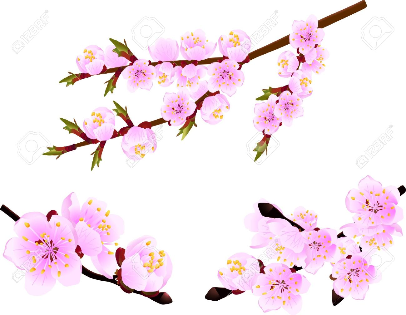 Blossoming Twig Of Spring Cherry Tree Royalty Free Cliparts.