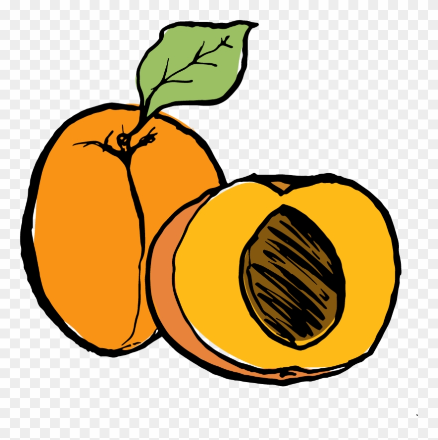 Apricot Clipart (#752107).