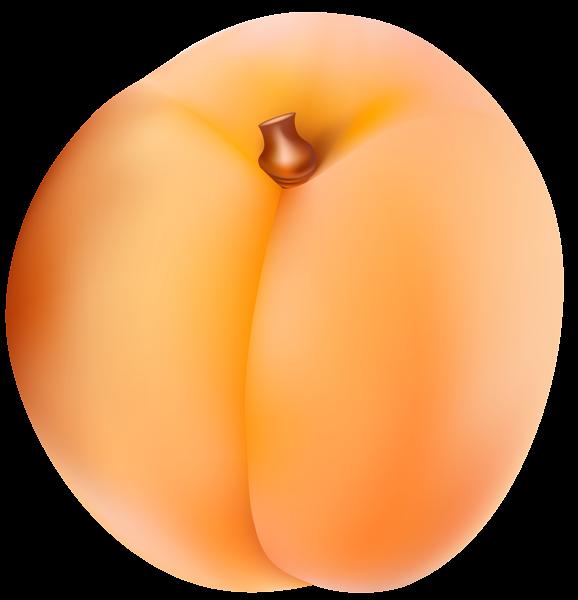 Apricot PNG Clip Art Image.