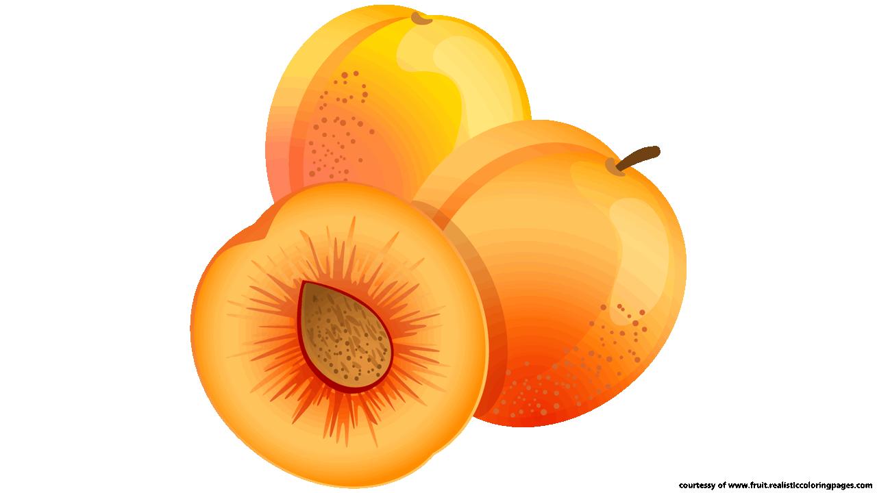Apricot clip art.