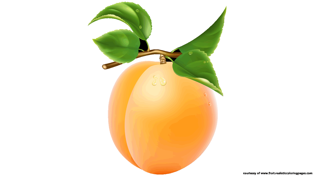 Downloads 7 Apricot Royalty Free Clipart.