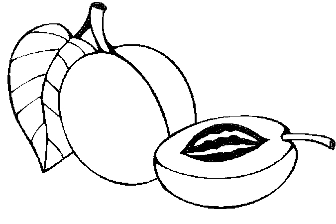 Free Apricots Cliparts, Download Free Clip Art, Free Clip.