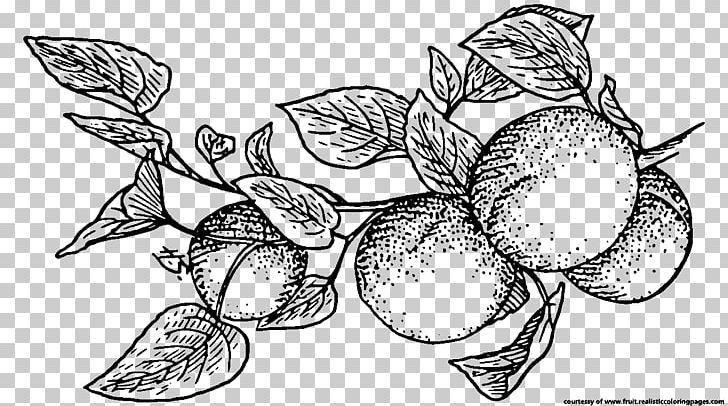 Fruit Apricot Line Art PNG, Clipart, Apricot, Artwork, Berry.