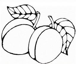 Free Apricot Cliparts, Download Free Clip Art, Free Clip Art.
