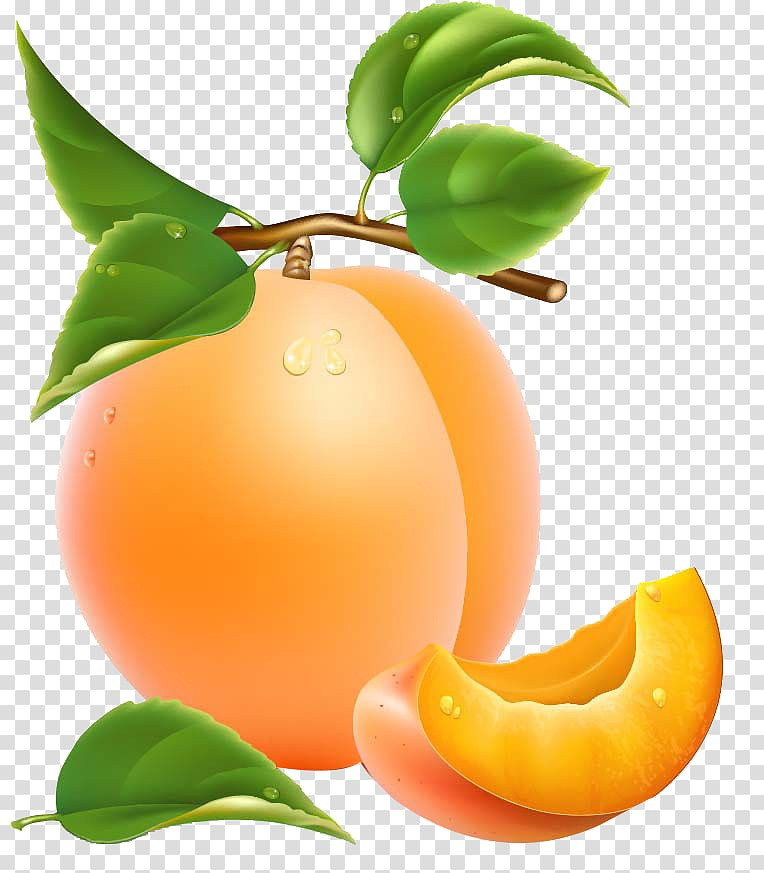 Apricot Fruit , Apricots pattern transparent background PNG.