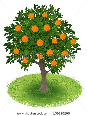 Orange Tree Field Stock Photos, Royalty.