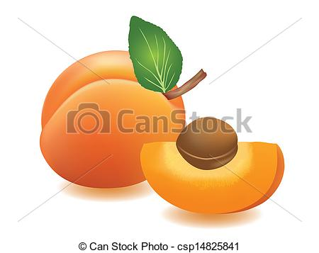 Apricot Clip Art Vector Graphics. 2,661 Apricot EPS clipart vector.