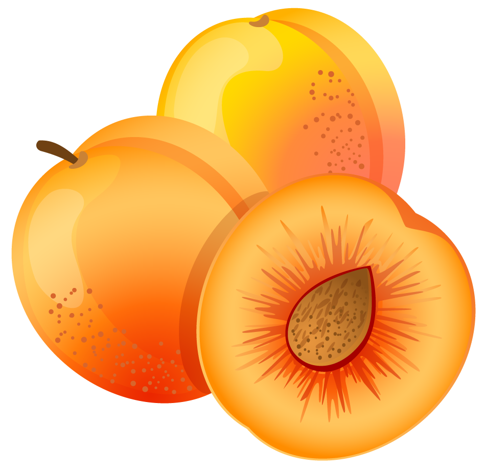 Apricots clipart - Clipground
