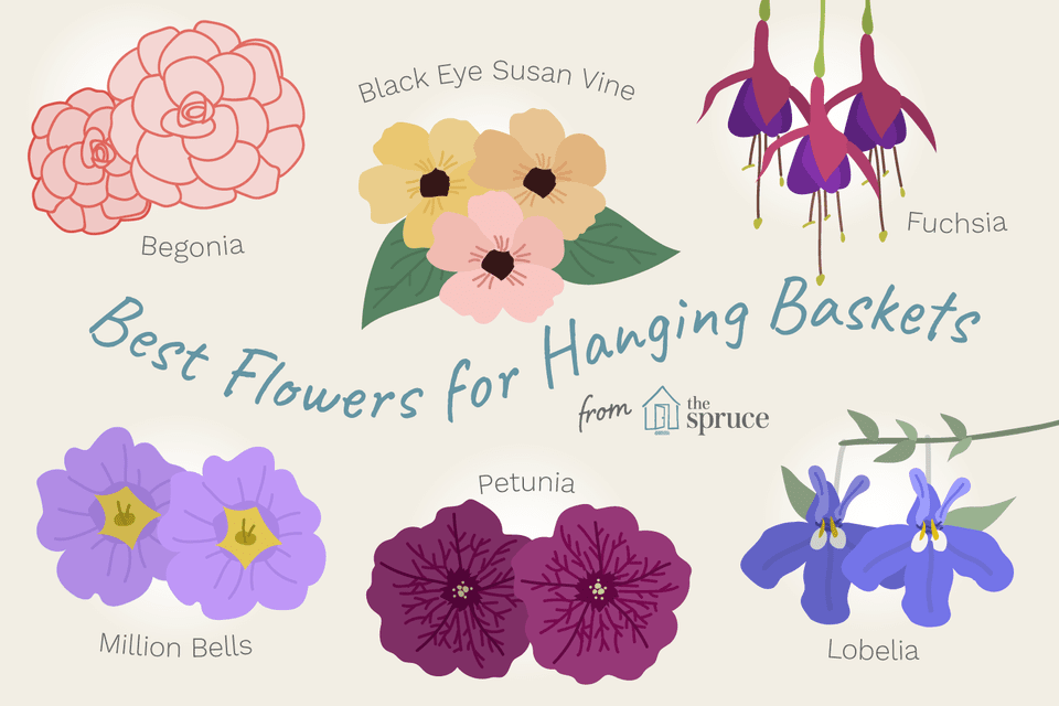 11 Best Flowers for Hanging Baskets.