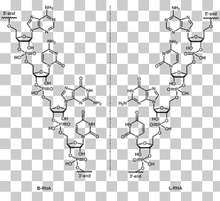 2 aptamer PNG cliparts for free download.