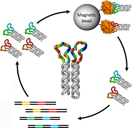DNA‐Nanoscaffold‐Assisted Selection of Femtomolar Bivalent.