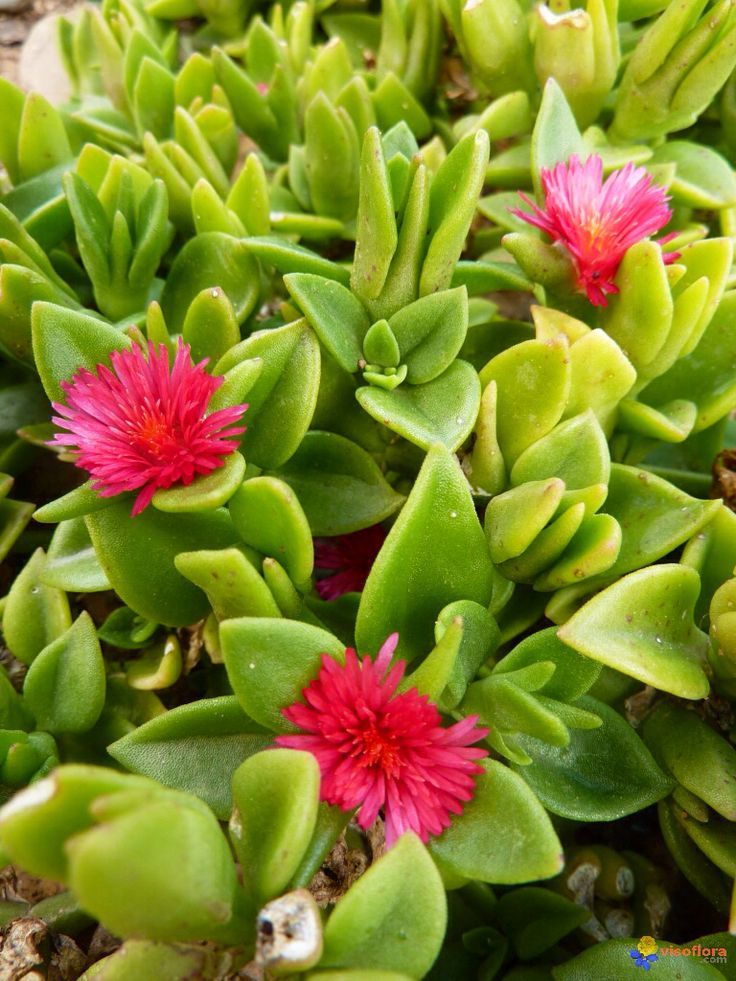 1000+ images about Succulents on Pinterest.