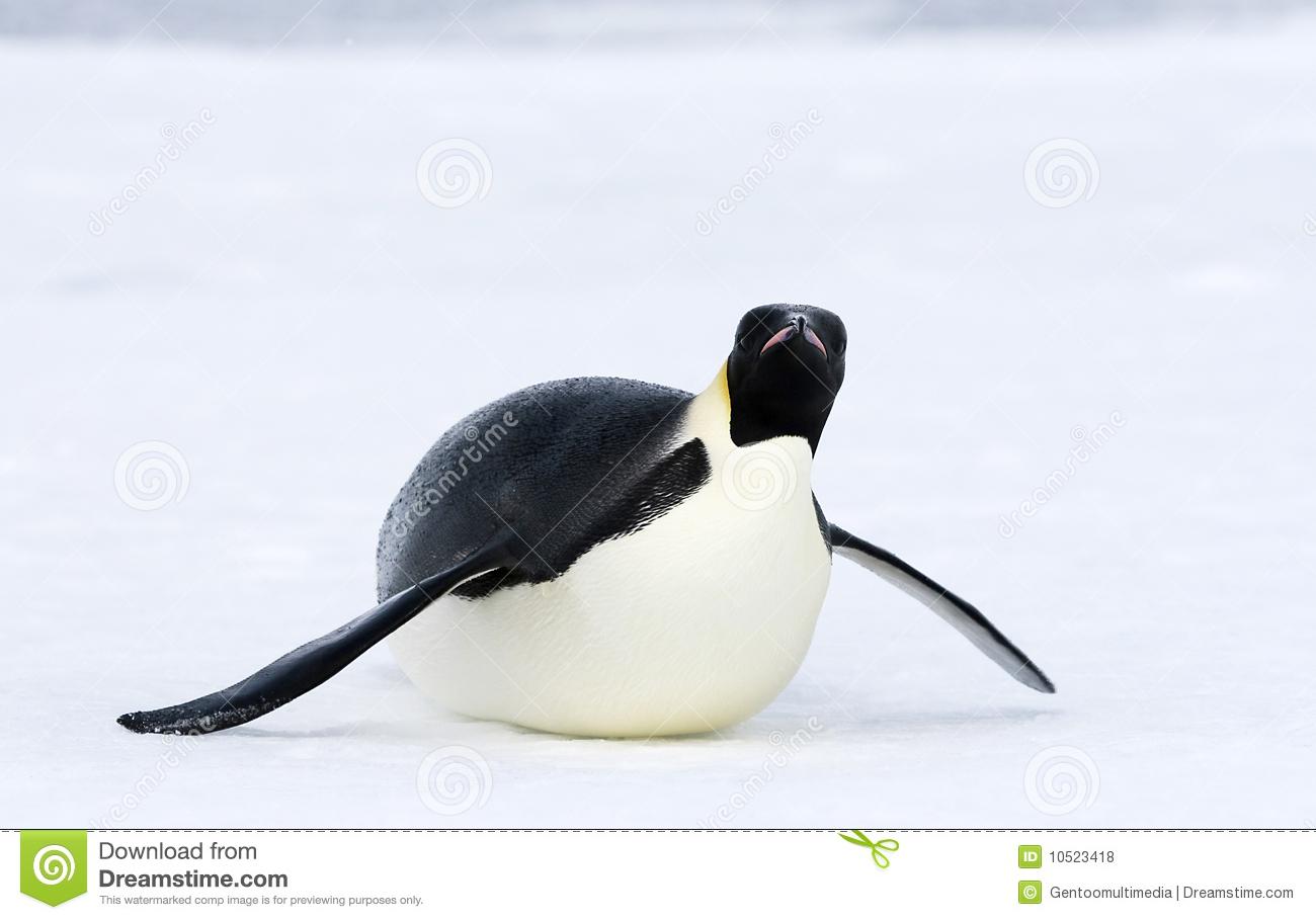 Emperor Penguin (Aptenodytes Forsteri) Royalty Free Stock Photos.