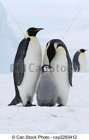 Stock Photo of Emperor penguins (Aptenodytes forsteri) on the ice.