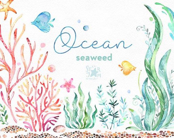 Ocean. Seaweed. Underwater watercolor clip art, water plants.