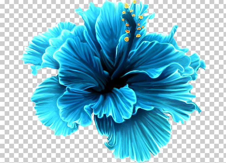 Flower Rose PNG, Clipart, Aqua, Blue, Blue Rose, Clip Art.