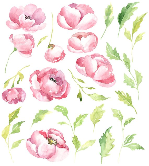 Gentle watercolor peony flowers clipart / watercolour pink.