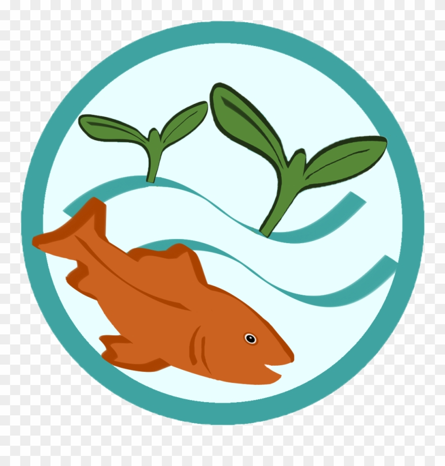 Learn About Aquaponics Grow Fish Plants Together.