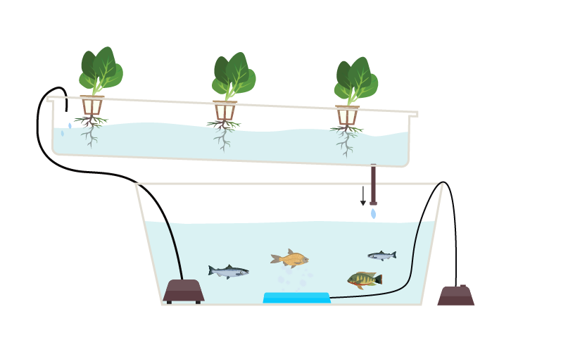 A Complete Guide to Aquaponic Gardening.
