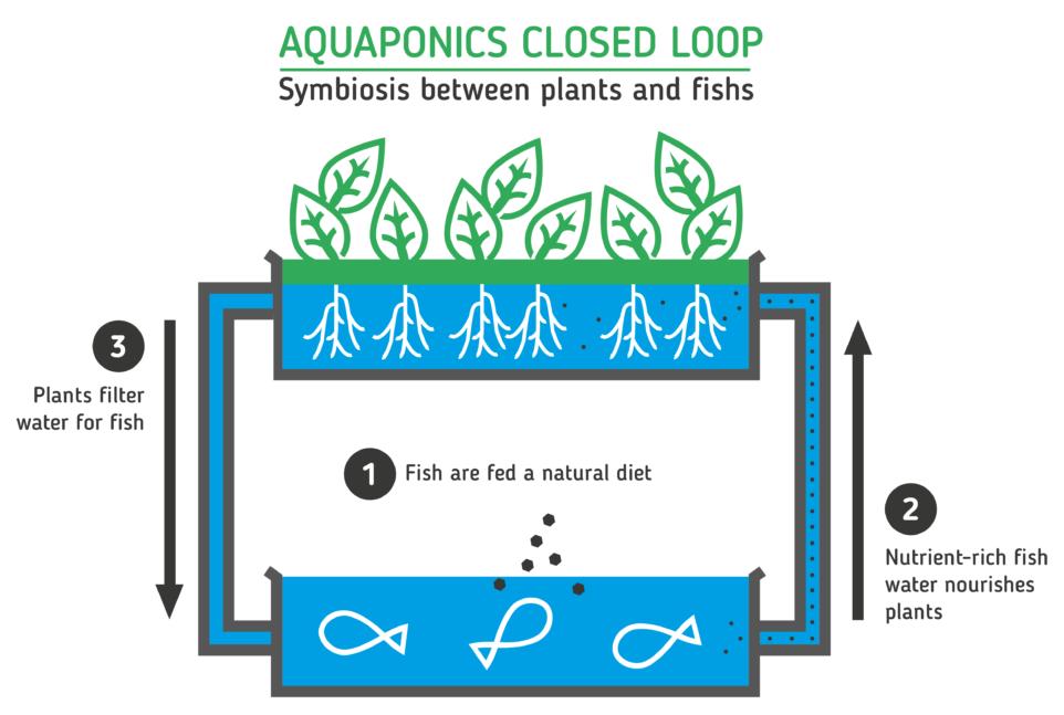 Story of Aquaponics.