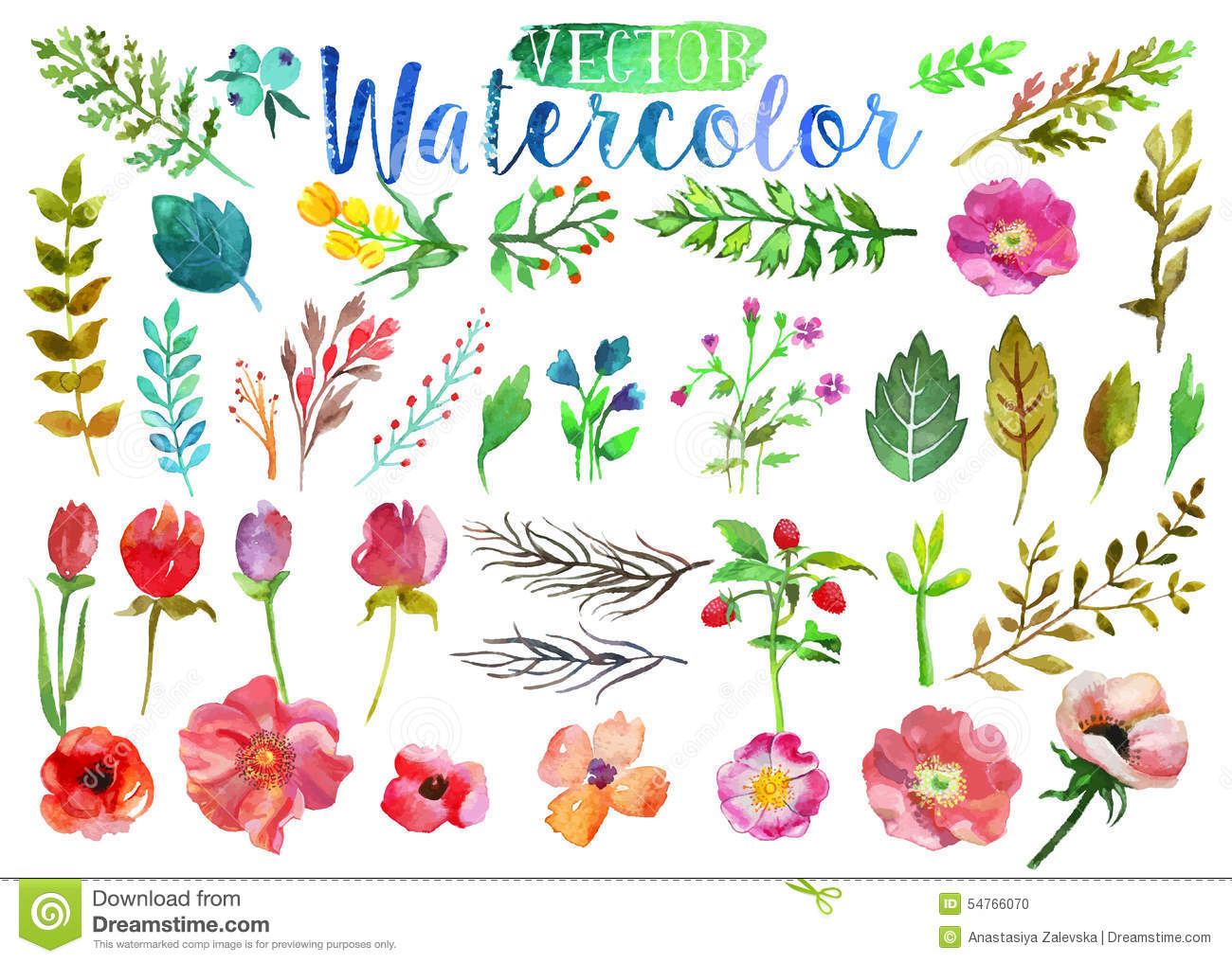 Watercolor Stock Illustrations.