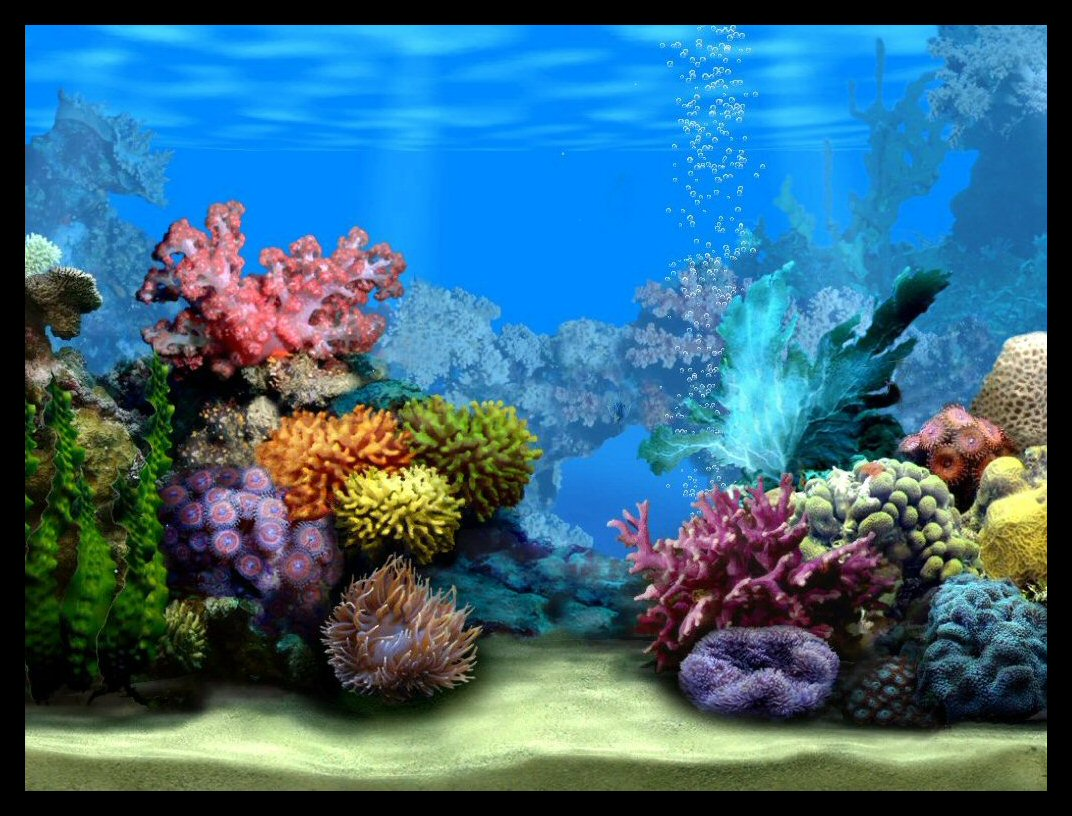 Fish tank background empty clipart.