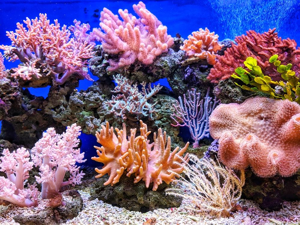 900+ Aquarium Background Images: Download HD Backgrounds on.