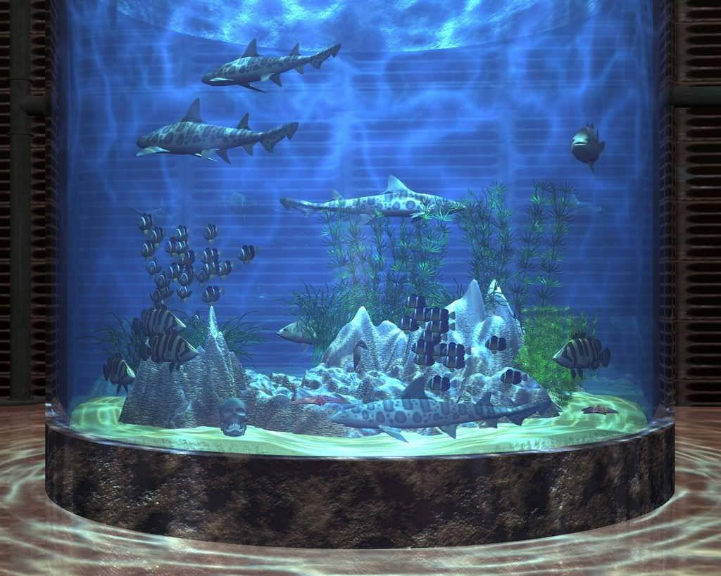 25+ Aquarium Backgrounds.
