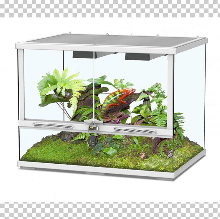 Terrarium Pets Reptile Vivarium Glass PNG, Clipart, Aquarium.